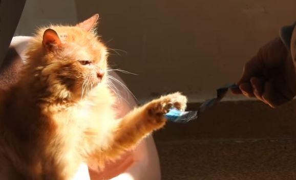 cinnamon the cat 8