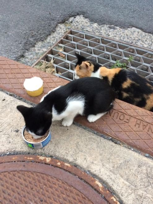 sewer cats 1