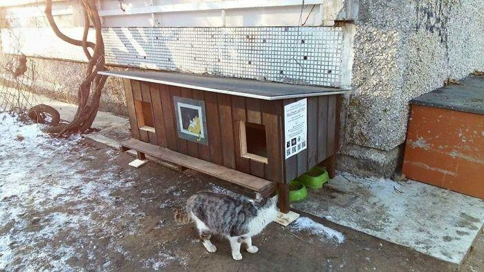 cat shelter 2