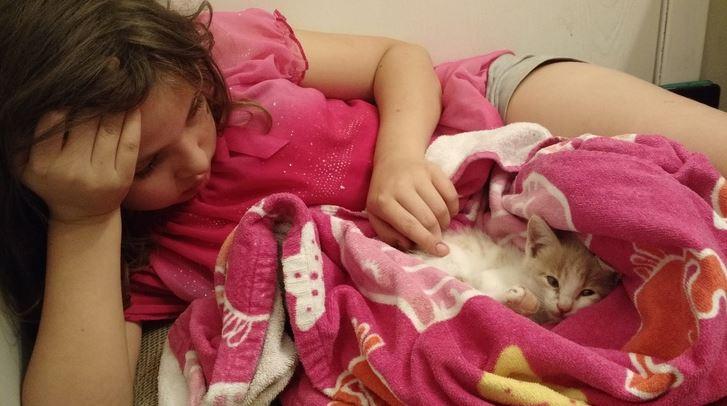 oscar the cat 2