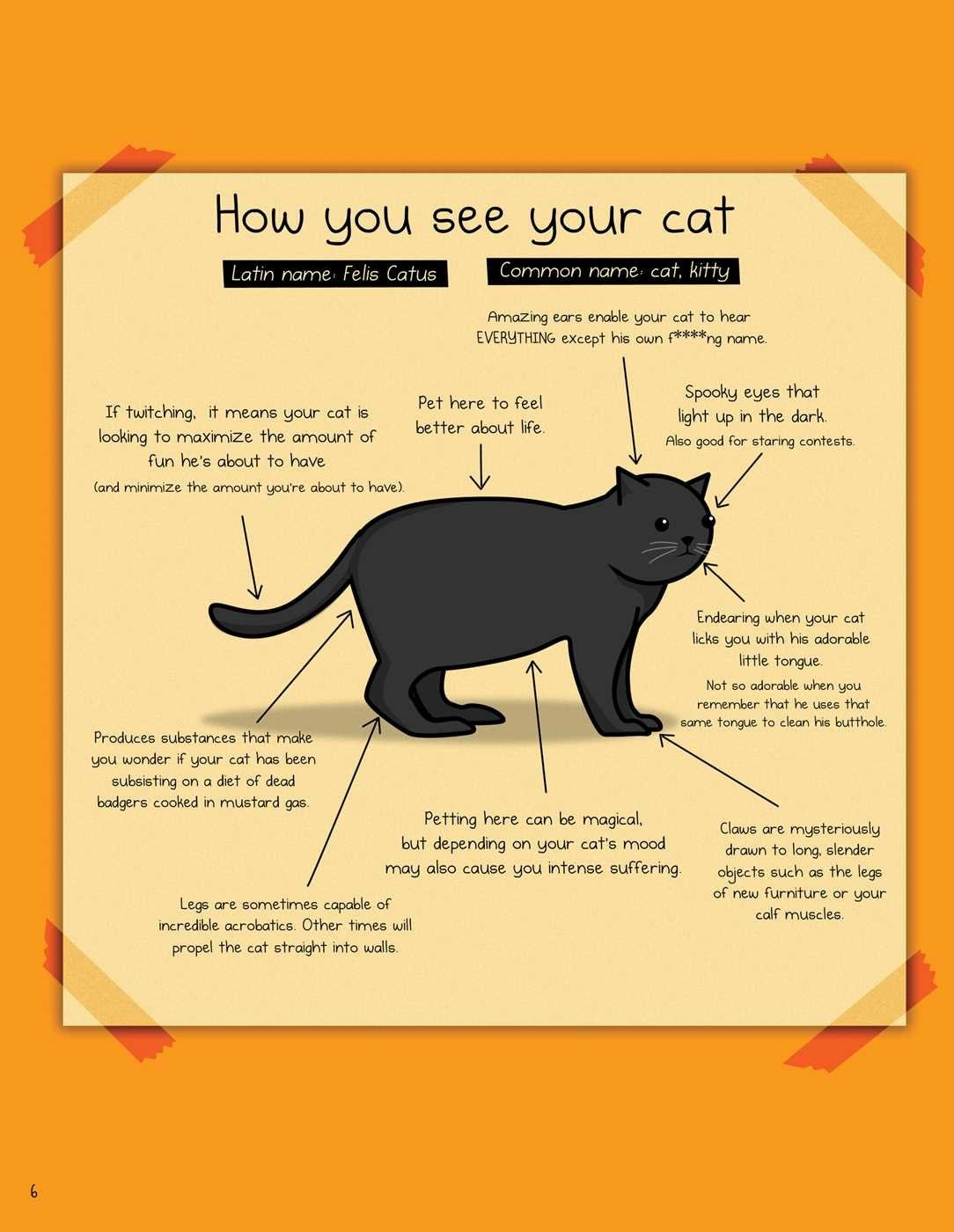 how we see cats