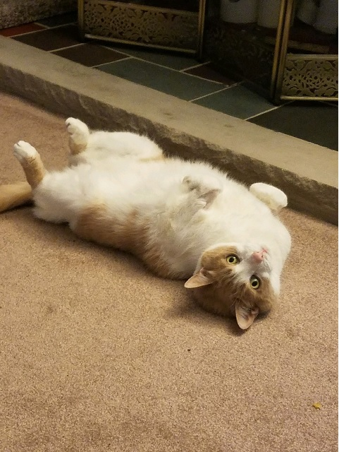 senior cat 6