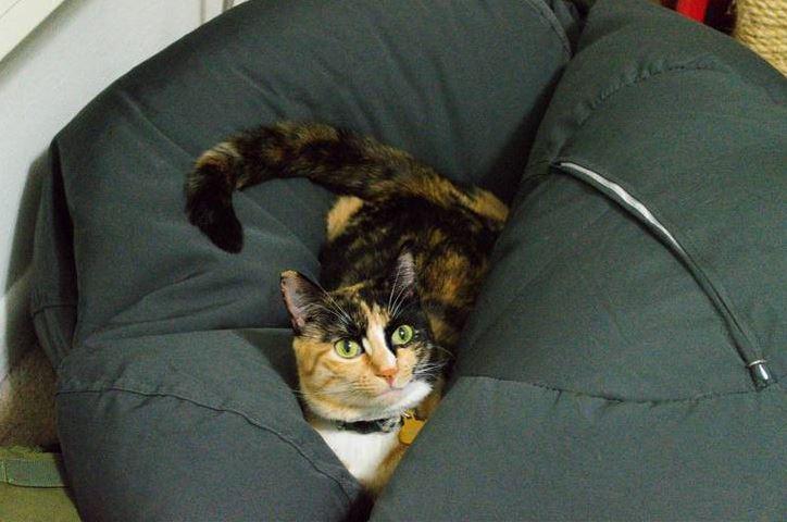 jazz the cat 4