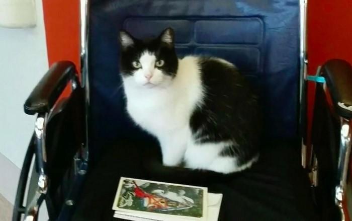 oreo the cat 5