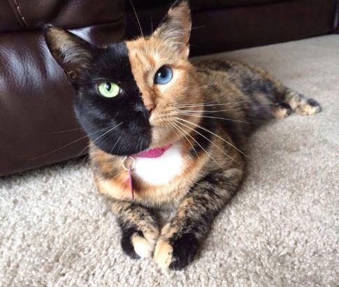 venus the cat