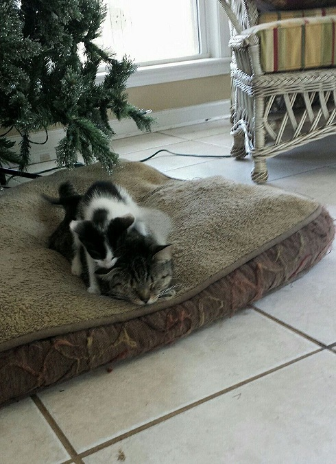 meesy the kitten 1