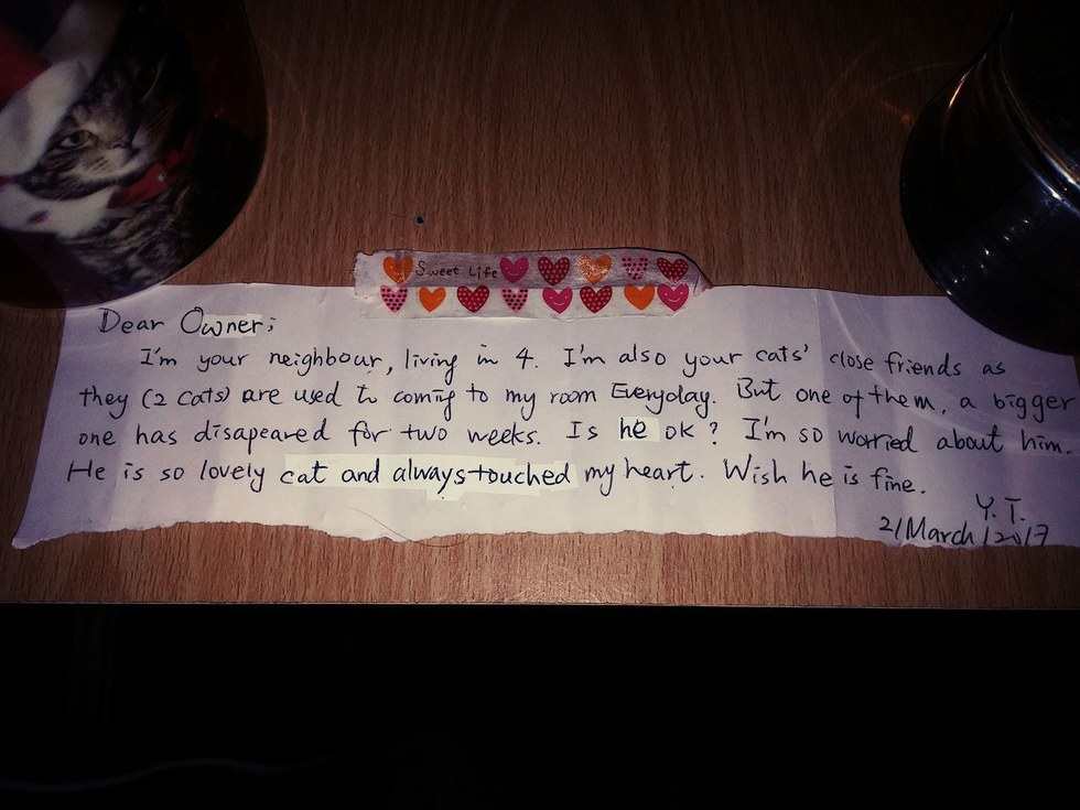A Man Mourning His Cat Gets A Touching Letter From A Stranger Who