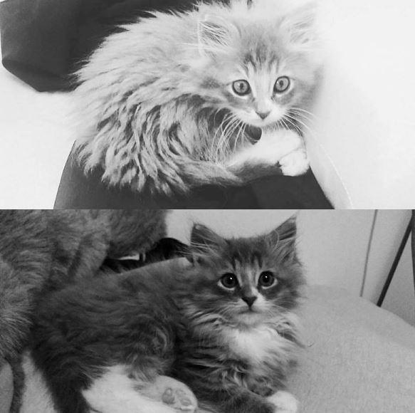 flemith the kitten