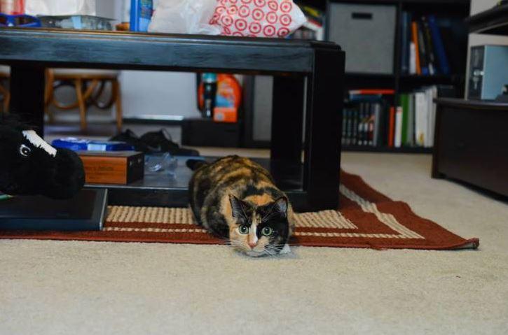 jazz the cat 5