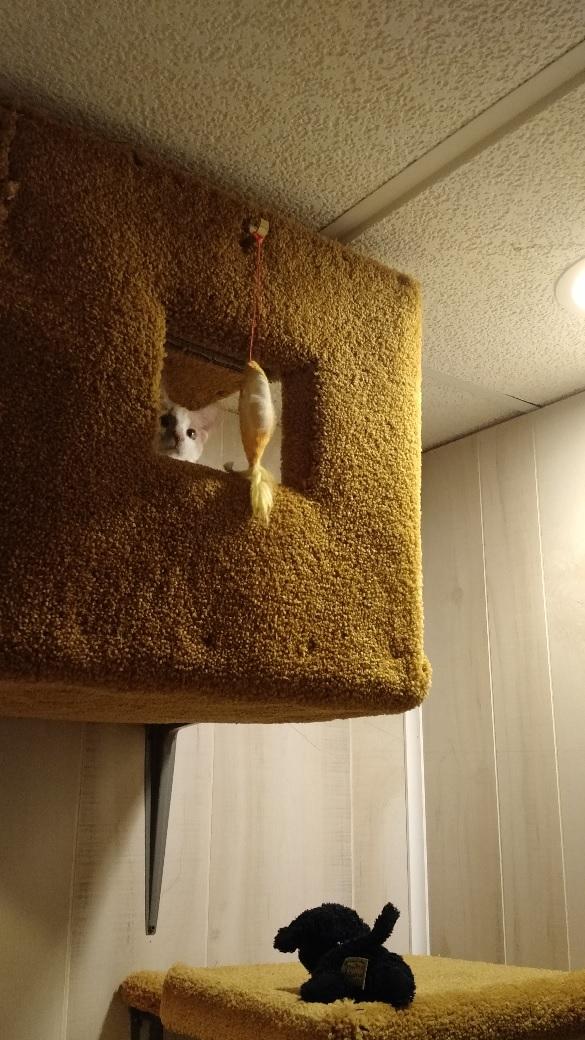 oscar the cat 9