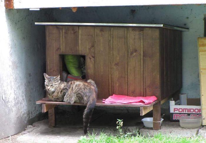 cat shelter 5