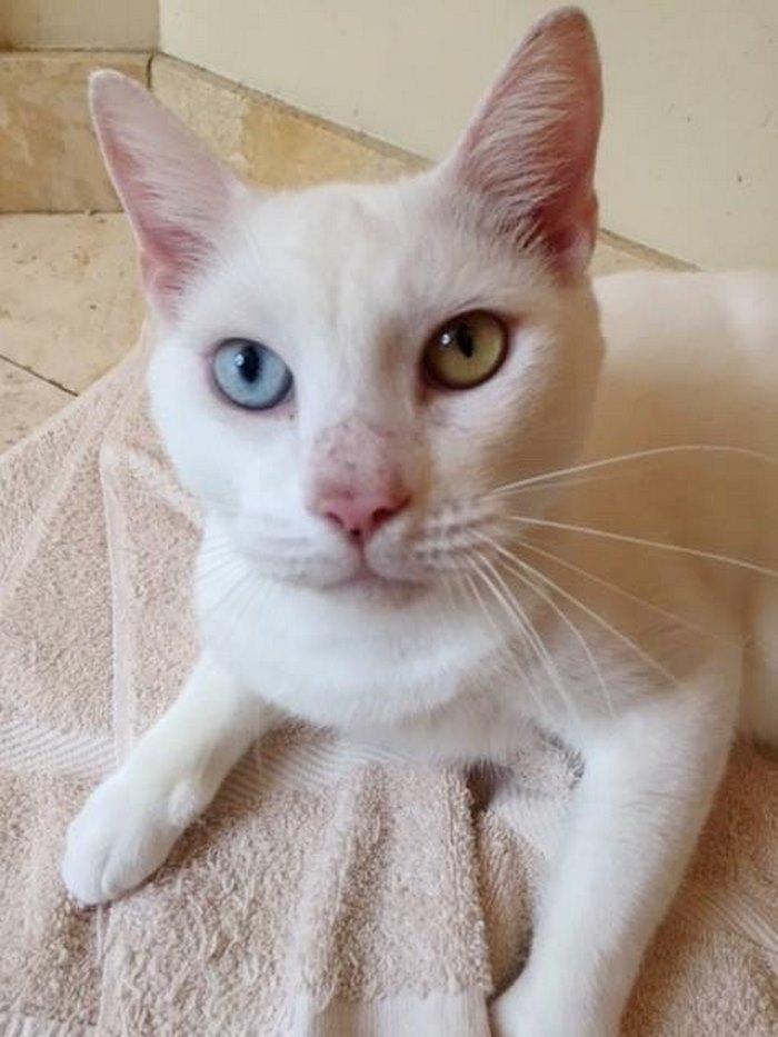 cotton the cat 5