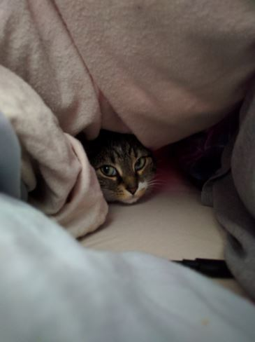 tucked in 1