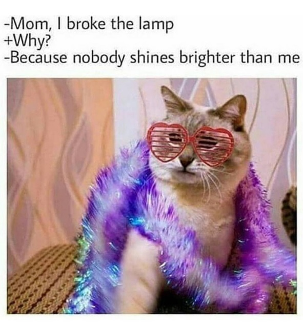 16 Sassy Kitty Memes That Will Crack You Up
