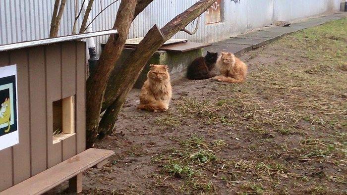 cat shelter 9