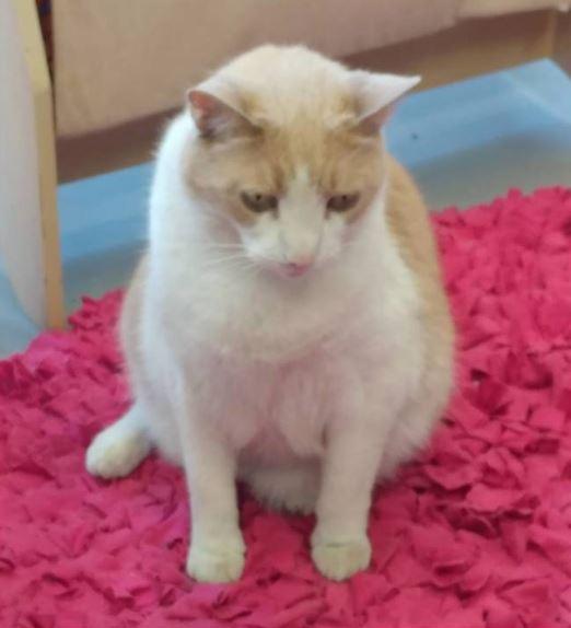 senior cat 1