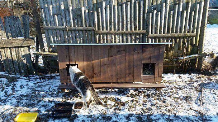 cat shelter 6