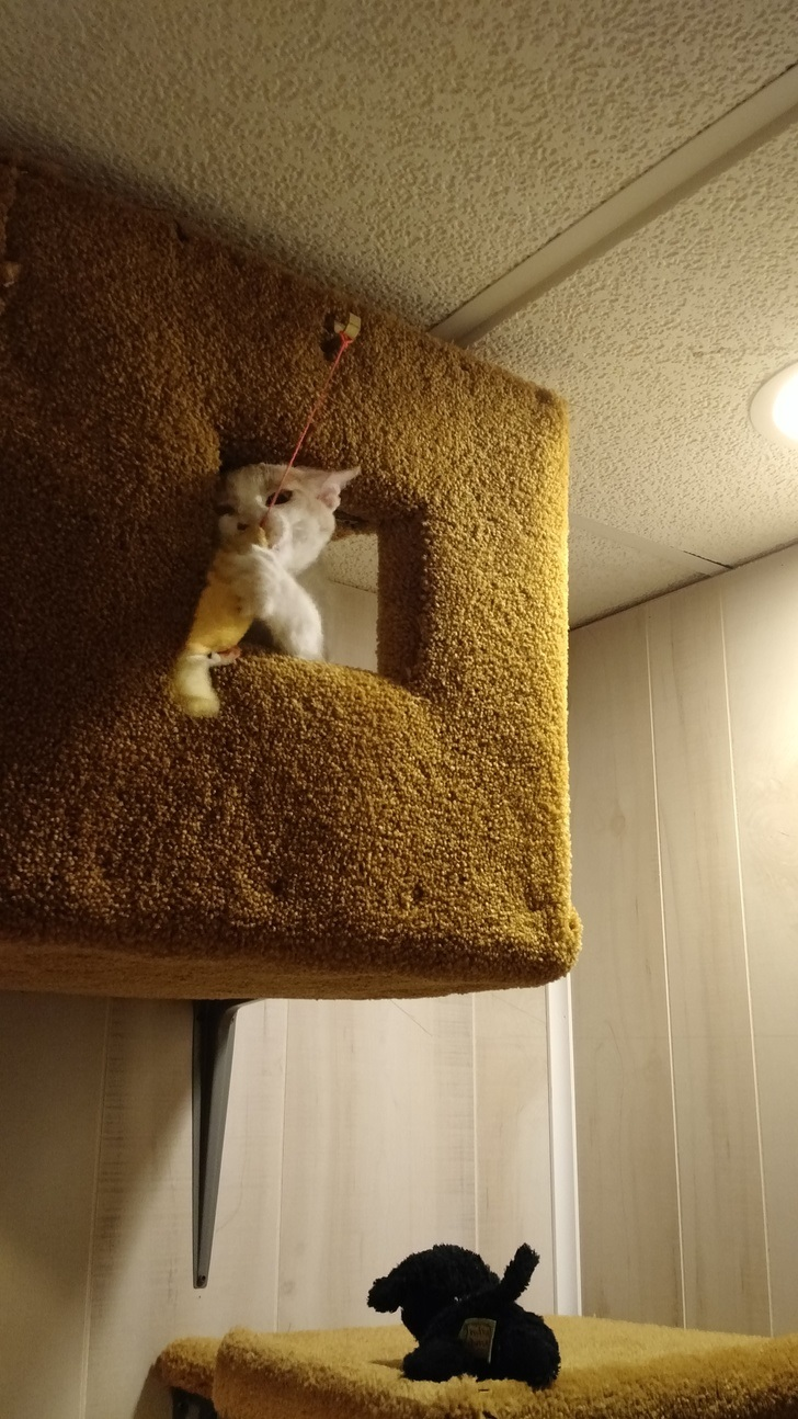 oscar the cat 10