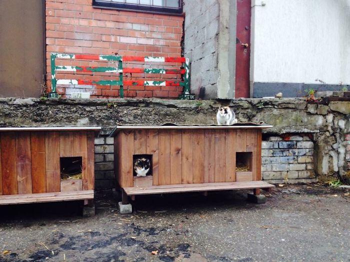cat shelter 10