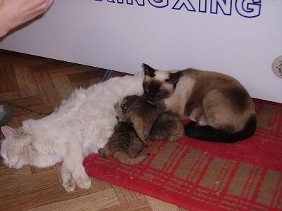 bob kittens 4