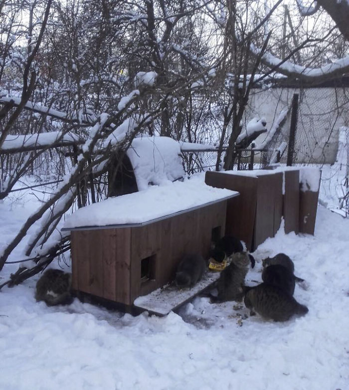 cat shelter 11