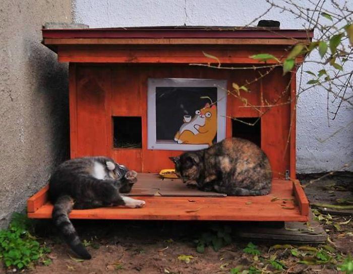 cat shelter 1