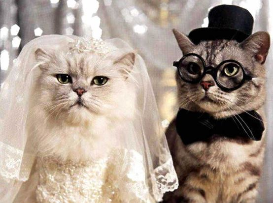 A kid sends his neighbor the most adorable wedding invitation for cat wedding junglespirit Images