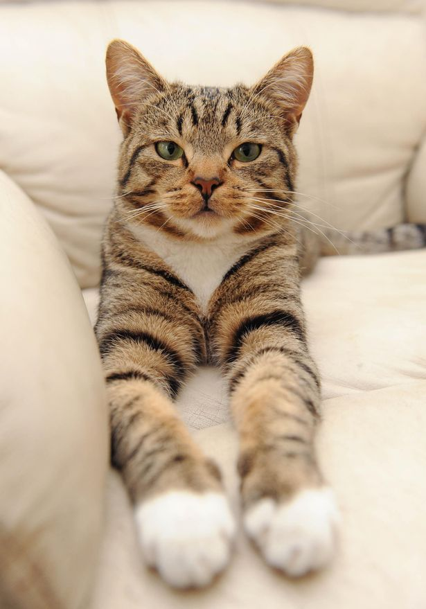 smudge the hero cat 5