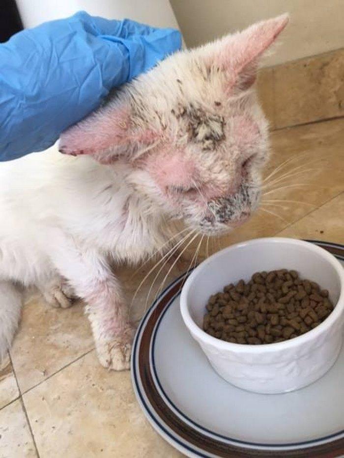 cotton the cat 4