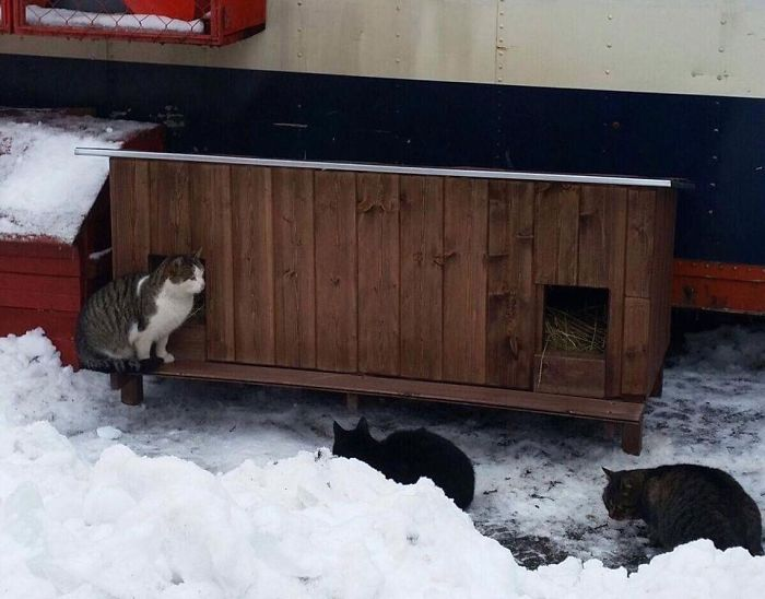 cat shelter 12