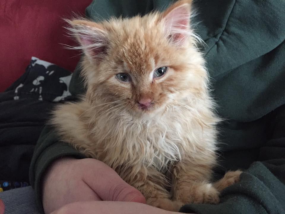 ambrose the kitten 5