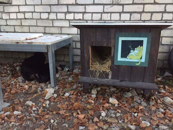 cat shelter 7