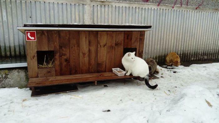 cat shelter 4