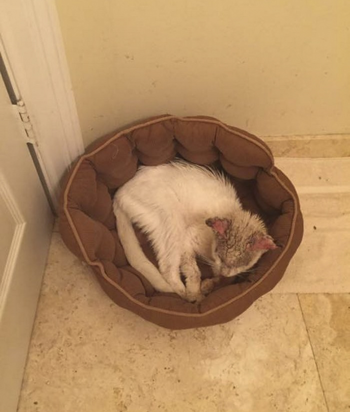 cotton the cat 3