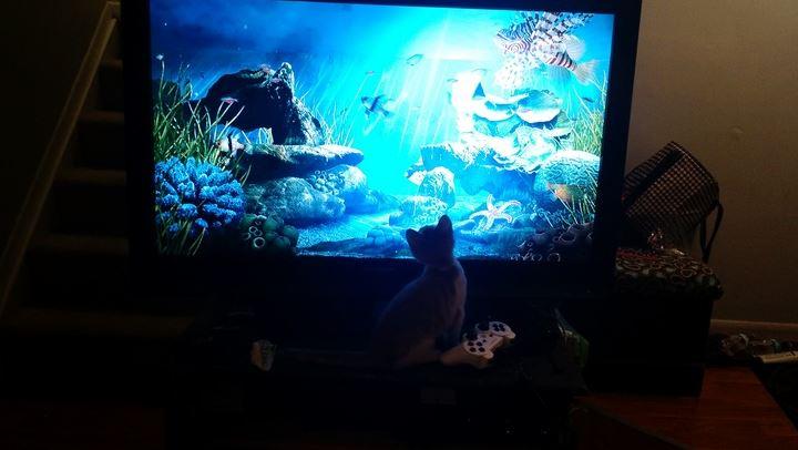 oscar the cat 6