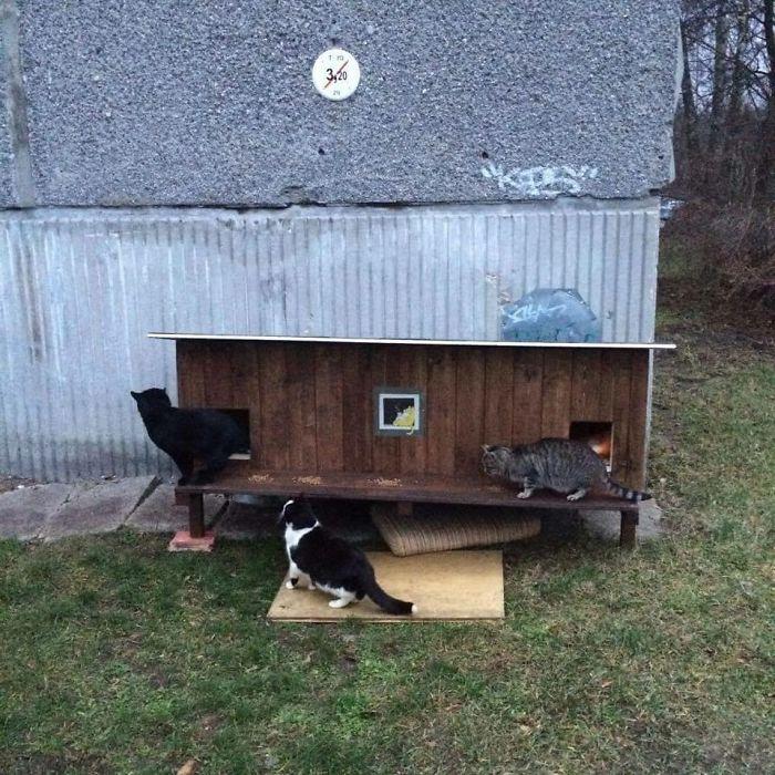 cat shelter 13