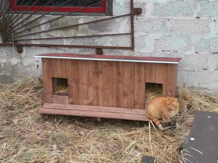 cat shelter 8