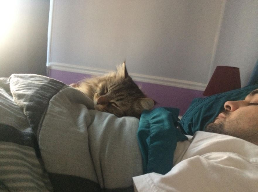 max the cat cuddling with husband