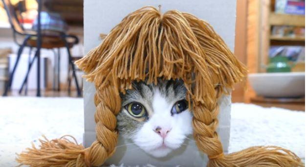 maru the cat 3