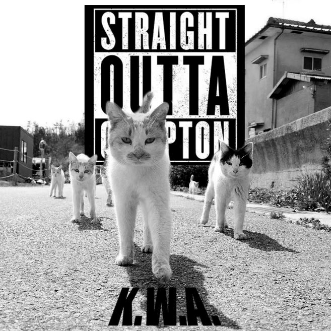 kittiz wit attitudes cat photoshop battle