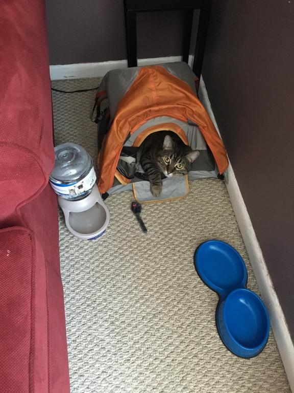 cat camp tent 1