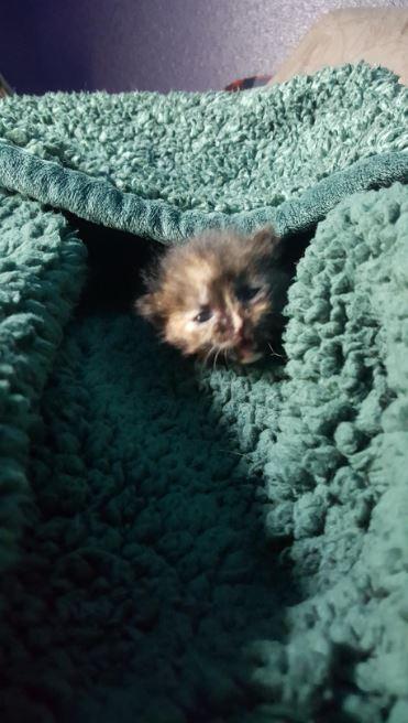 moogy the kitten cuddling in bed