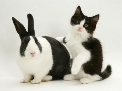 matching kitten and bunny black and white