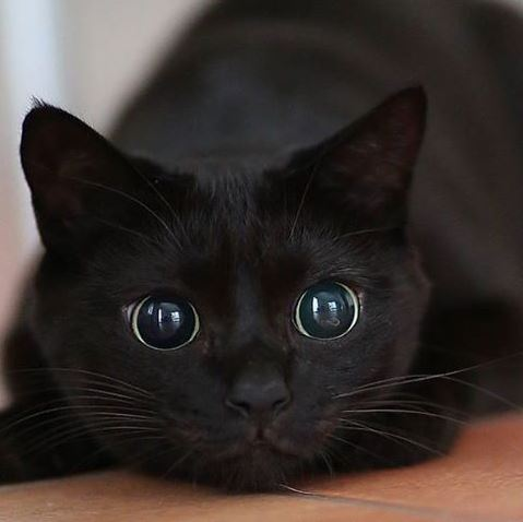 cat murder eyes