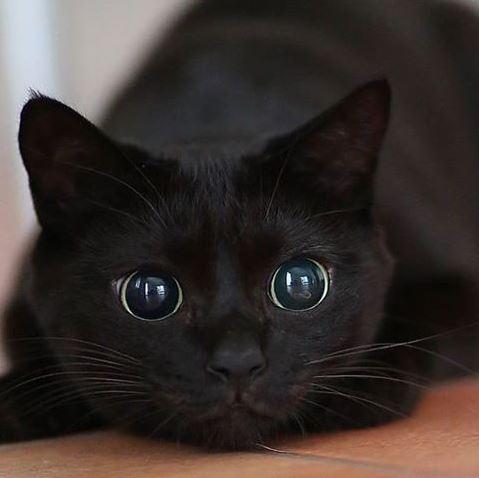 cat murder eyes