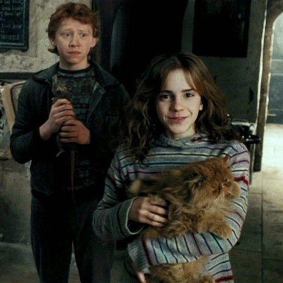 Hermione's Cat Crookshanks Was the Real Hero of 'Harry ...  |Harry Potter Hermione And Crookshanks