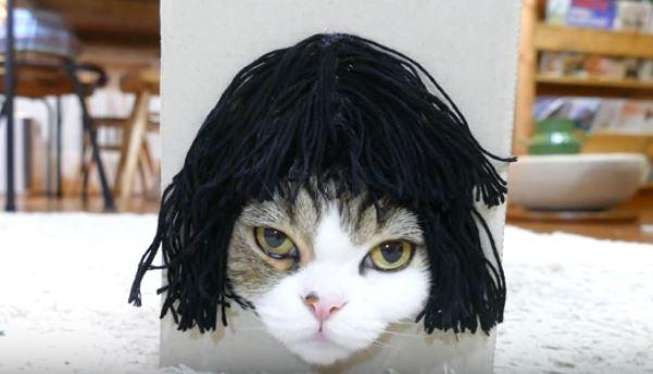 maru the cat 2