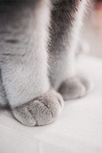 cat paws 3