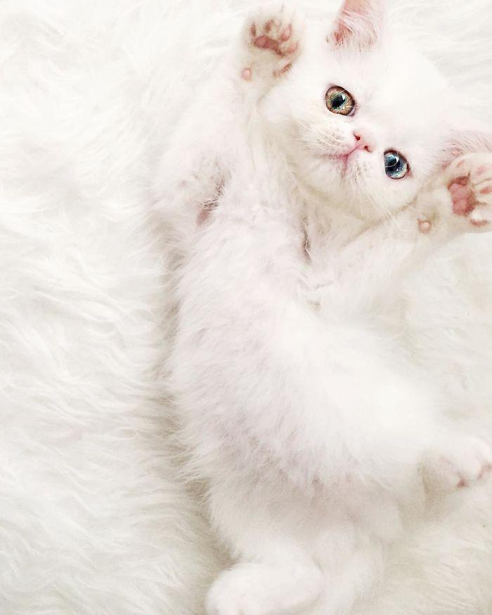 pam pam the cat 10