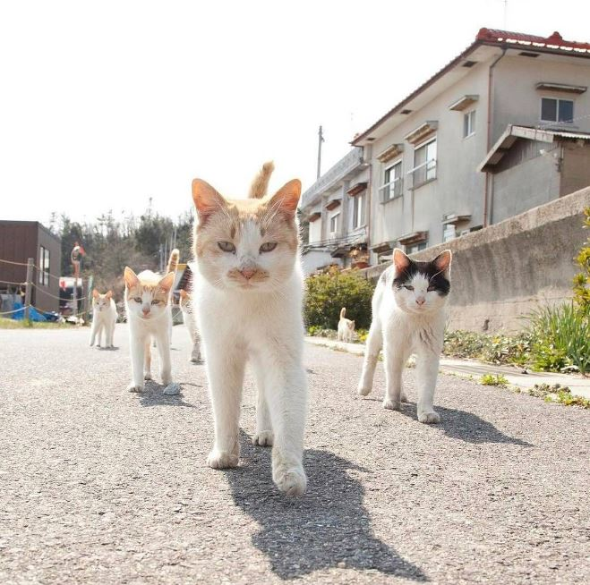 japanese cats walking through neighborhood